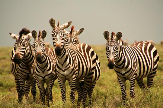 A 12 Day Safari in the Green Season 1