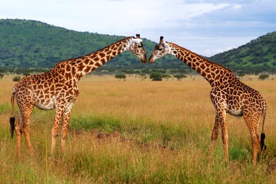 Mother and Daughter Safari 4