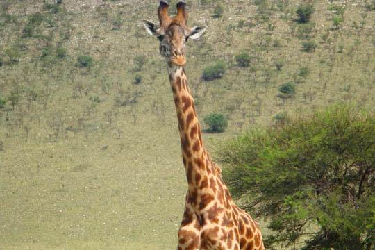 Safari in Tanzania 1