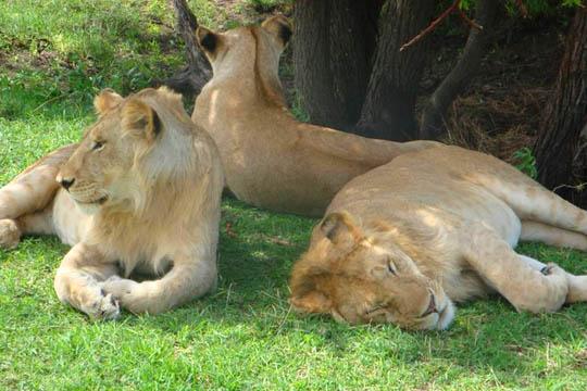Safari in Tanzania 2