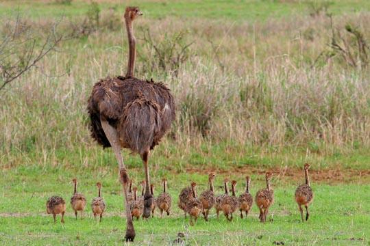 Unusual Safari Animals_0013_Layer 8