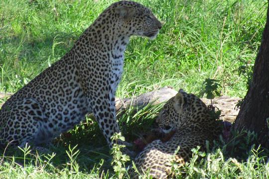 Our Serengeti Plains trip_5