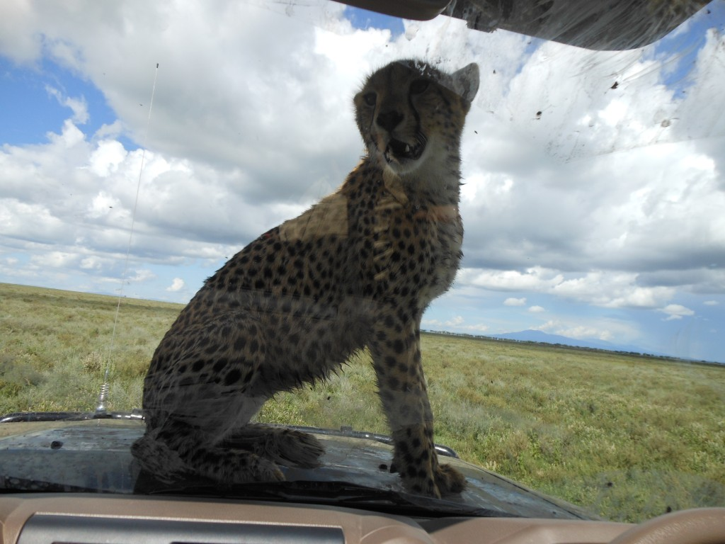 Serengeti - April 2013 - 60th birthday 181