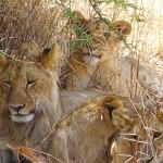 BJ and Ray Safari Photos_November 2016 (1)